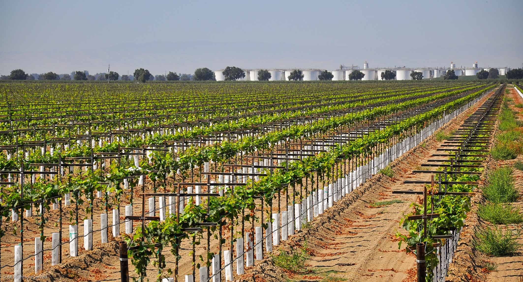 Vineyard at Gallo Manufacturing Plant in Livingston California